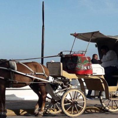 Comienzan acercamientos con agrupaciones para sustituir calesas por calandrias en Cozumel