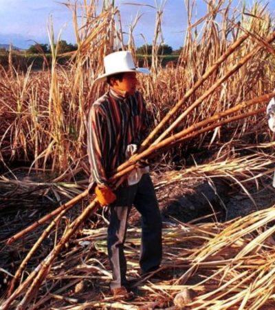 Preocupa a productores de QR atraso en el inicio de la zafra por fallas de maquinaria del ingenio azucarero San Rafael de Pucté