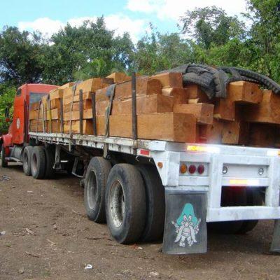 Asegura Profepa cuatro tractocamiones con madera de procedencia ilegal en Campeche