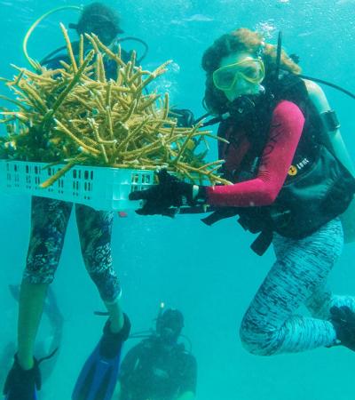 Avanza proyecto de producción y siembra de corales en arrecife mesoamericano de Quintana Roo