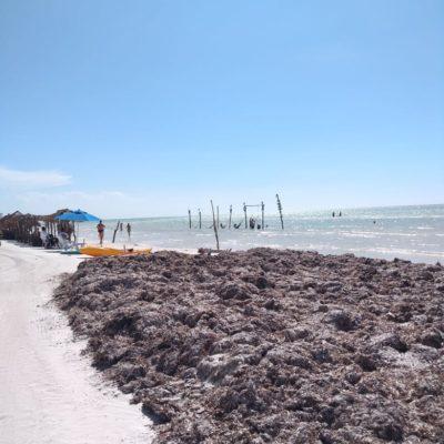 Piden programa de limpieza de playas por acumulación de sargazo en Holbox