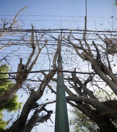Inyectan aceite a ocho árboles para secarlos porque tapan la fachada de un bar en Guadalajara