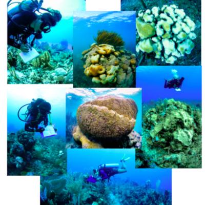 Mitad de corales en Akumal tendrían síndrome blanco, advierte estudio del CEA