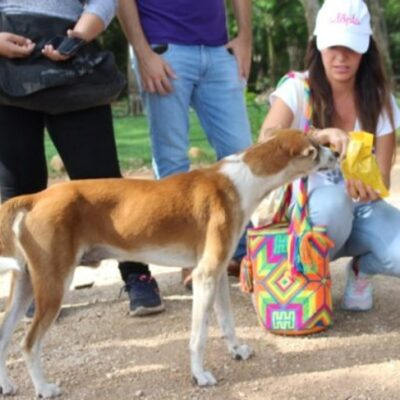 Pondrán en adopción a perros que viven en Chichén Itzá