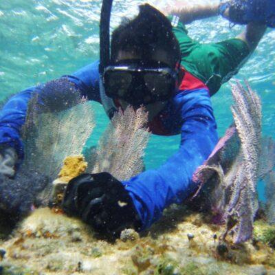 Confirman especialistas deterioro de los arrecifes de la Gran Barrera Mesoamericana