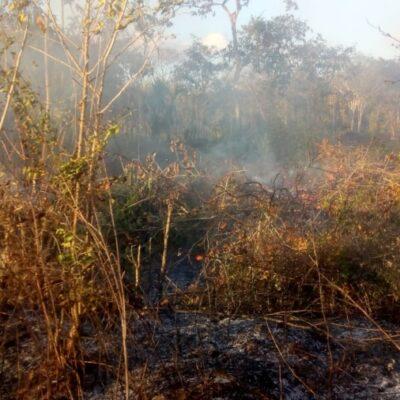Se registra el primer conato de incendio forestal en Lázaro Cárdenas