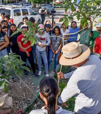 Inicia la campaña 'Reforestemos Tulum 2020'