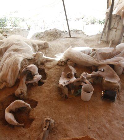 Cancelan relleno sanitario por hallazgo de mamuts en Tultepec