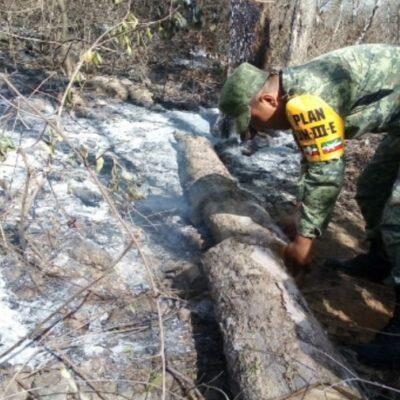 Incendios en la reserva Balam Ka'ax son provocados por cazadores furtivos