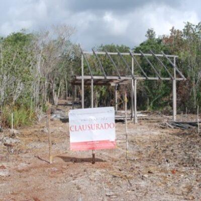 Profepa clausura obras por dañar más de 900 metros de manglar en Bacalar