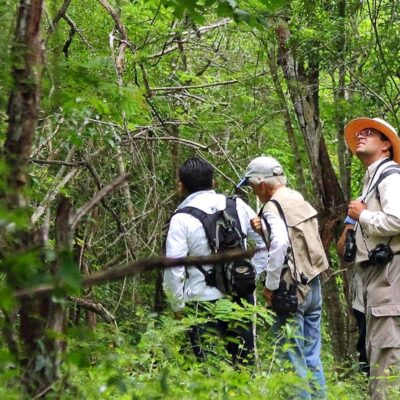 Buscan colocar a Yucatán como destino potencial de aviturismo