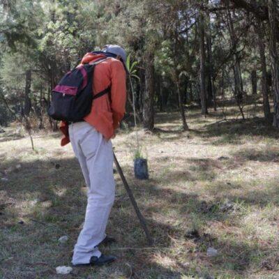 Deberá sembrar cien árboles frutales y cuidarlos durante 4 años por provocar un incendio forestal