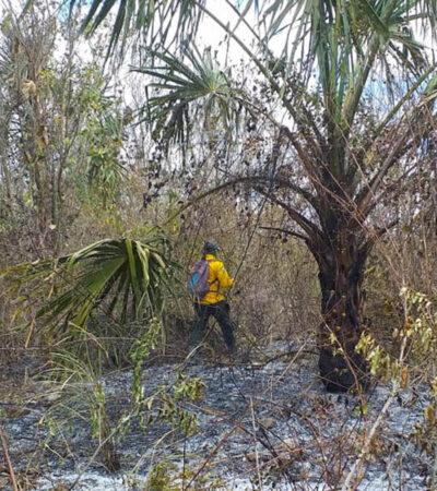 Se encuentra QR entre los 15 estados con incendios forestales activos