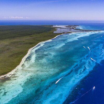 Aislamiento social genera condiciones favorables para la fauna y flora marina en Cozumel, afirma Conanp