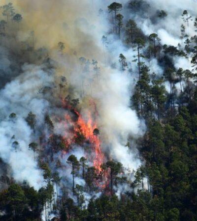Casi 400 hectáreas arrasadas por incendios forestales en Veracruz