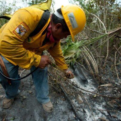 Profepa inicia investigación de incendio forestal provocado en Mahahual