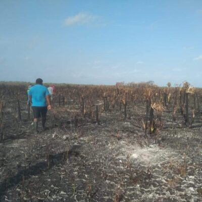 Afectan Quintana Roo 40 incendios forestales y dañan más de 8 mil hectáreas