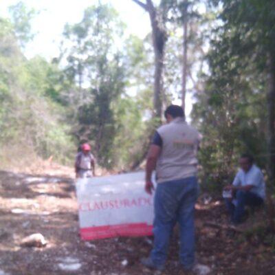 Profepa clausura devastación de 10 hectáreas de selva en ejido de Valladolid Nuevo, en Lázaro Cárdenas