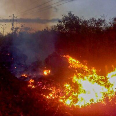 """Incendio forestal daña superficie del Área de Protección de Flora y Fauna """"Bala'an K'aax"""" en JMM"""