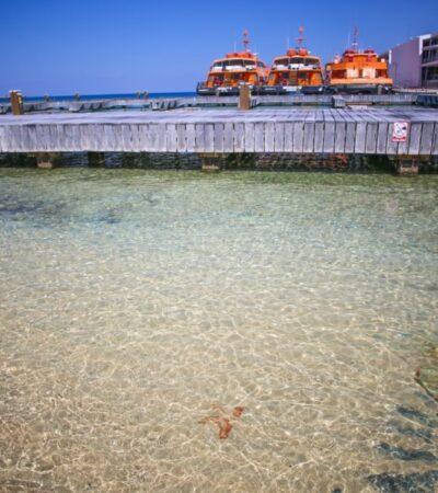 Avistan estrella de mar junto al muelle fiscal de Cozumel, ante nula presencia de bañistas y embarcaciones en la zona