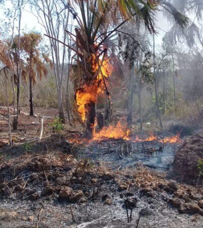 Se registran dos nuevos incendios de vegetación en José María Morelos