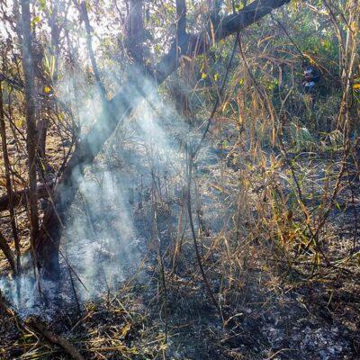 Incendio forestal en José María Morelos sigue vigente, pero no representa peligro