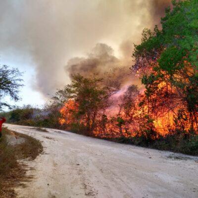 Ante aumento de incendios forestales, piden activar equipo especial para combatir siniestros en Quintana Roo