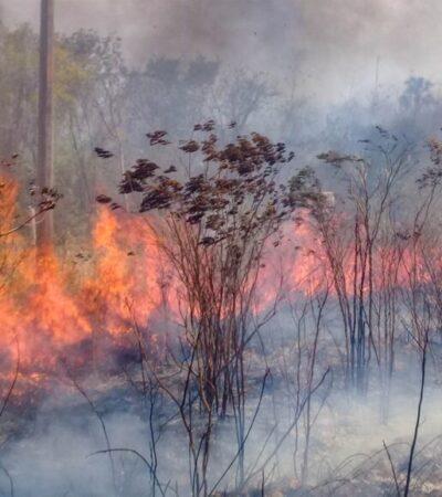 """Incendio forestal en el área protegida de JMM """"Bala'an K'aax"""" cumple tres semanas activo"""