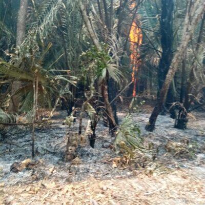 Incendio cerca de zona arqueológica de Ichkabal al sur de Quintana Roo