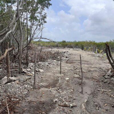 Investiga Fiscalía destrucción de manglar y humedales en Mahahual