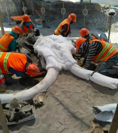 Hallan restos de más de 60 mamuts y vestigios arqueológicos en Santa Lucía