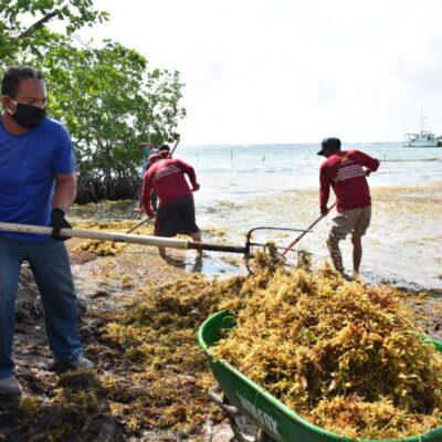 Iniciará la Secretaría de Marina recolección de sargazo, una vez instaladas las barreras en Mahahual