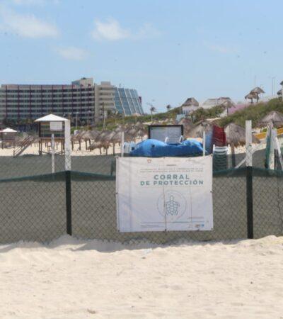 Se deslinda el PVEM de autorizaciones a polémico proyecto hotelero en Cancún y le echa la bolita a Remberto Estrada
