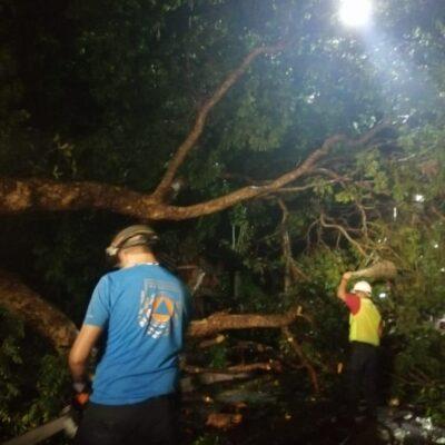 Turbonada derriba árboles en Puerto Aventuras
