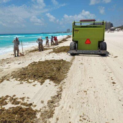 Advierten inminente presencia de sargazo en litoral de Quintana Roo
