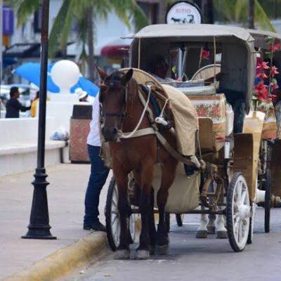 A la expectativa, caleseros de Cozumel al vencer el plazo para uso y explotación de caballos en QR