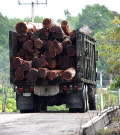 Venta de madera contribuye a la reactivación económica de los ejidatarios en Felipe Carrillo Puerto
