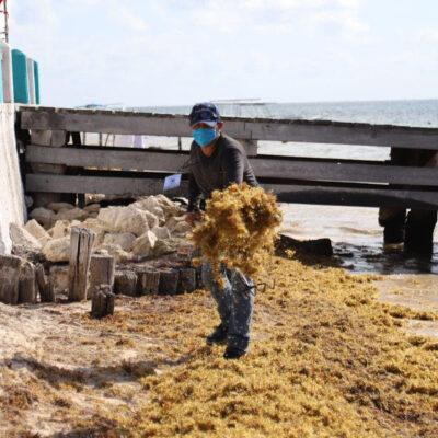RECALA SARGAZO EN PUERTO MORELOS: Activan trabajos de limpieza ante llegada del alga a las plays