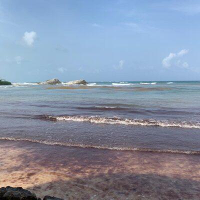 Playa del Carmen, destino de Quintana Roo más afectado por sargazo