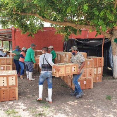 Profepa reubicará en Yucatán y QR a más de 9 mil tortugas que fueron decomisadas en CDMX