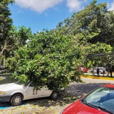 Cae árbol sobre vehículo en la avenida Náder