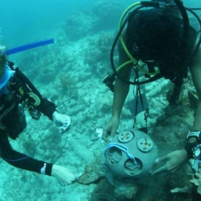 Buzos de Tulum monitorean y dan mantenimiento a corales sembrados en Akumal