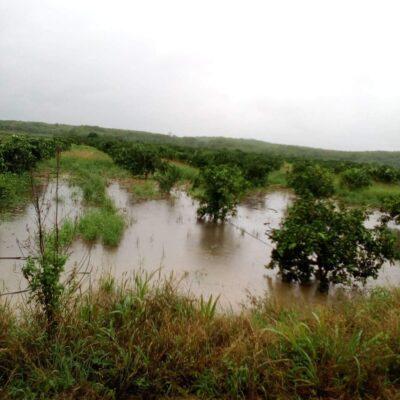 Se inundan cultivos en José María Morelos