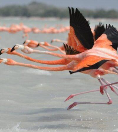 El debilitamiento de la Conanp vulnera la biodiversidad y genera desempleo, afirma especialista