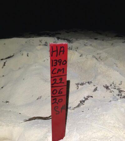 Reportan aumento de nidos de tortugas marinas en Cozumel