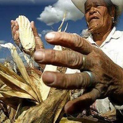 Greenpeace advierte peligro para el campo mexicano con privatización de semillas