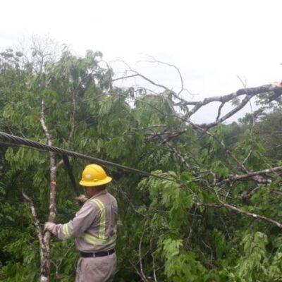 Restablece CFE el servicio de electricidad en zonas afectadas por la tormenta tropical 'Cristóbal' en el Sureste