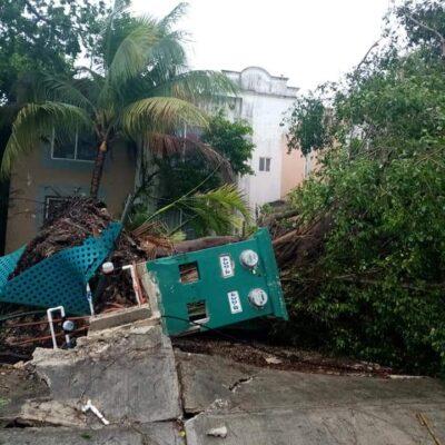 VIENTO, LLUVIA Y ANEGAMIENTOS EN PLAYA: Caen árboles, postes y anuncios por aguaceros de tormenta 'Cristóbal'
