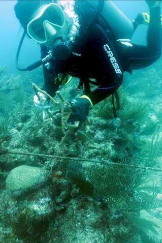 Evalúa el Centro Ecológico Akumal los daños en arrecifes ocasionados por la tormenta 'Cristóbal'
