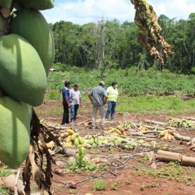 Sedarpe evalúa daños ocasionados por las lluvias en cultivos y ganado del sur de QR